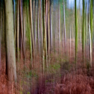 Ghost Trees 2