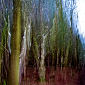 Ghost Trees 4