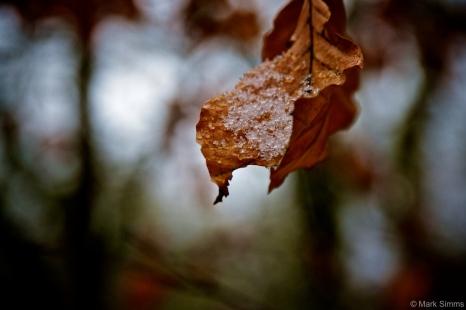 Leaf Ice