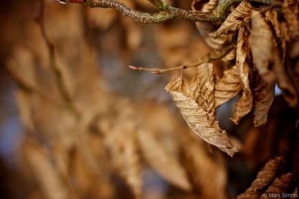 Winter Flora 1