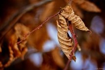 Winter Flora 2