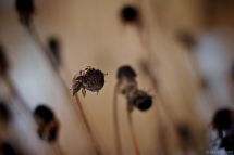 Winter Flora 3