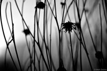 Winter Flora 4