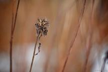 Winter Flora 5