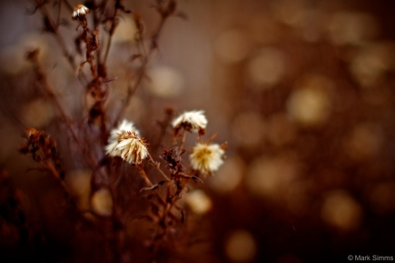 Winter Flora 6