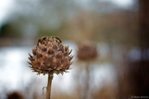 Winter Flora 9