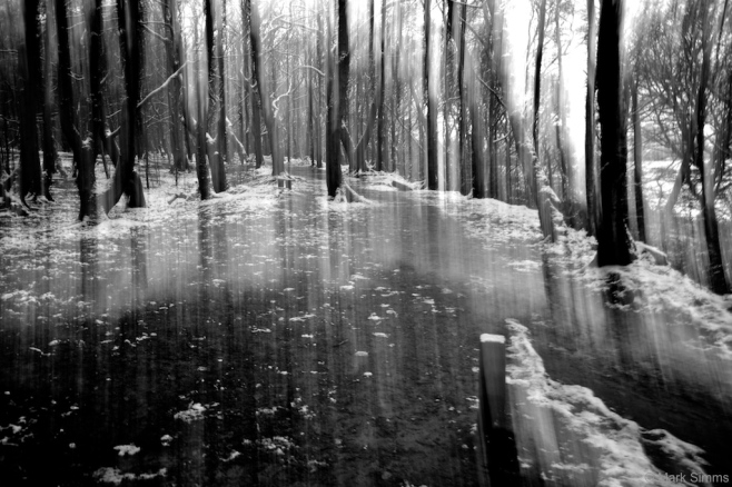 Winter Woods Abstract 4