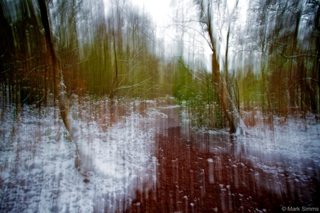 Winter Woods Abstract 5