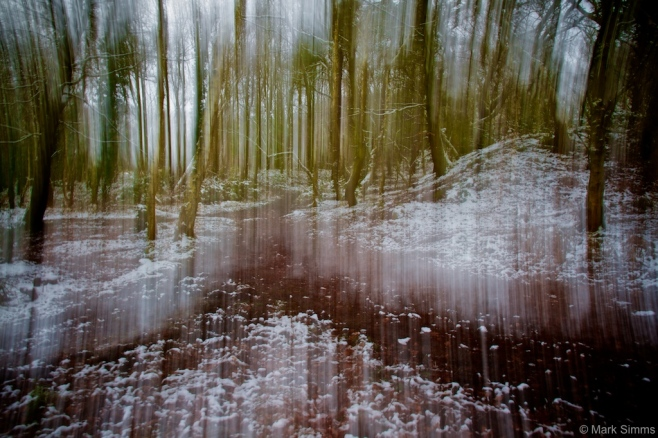 Winter Woods Abstract 6