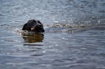 Wet Dog 3