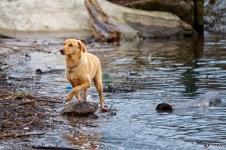 Wet Dog 5