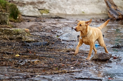 Wet Dog 6