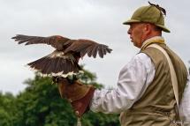 Victorian Falconer
