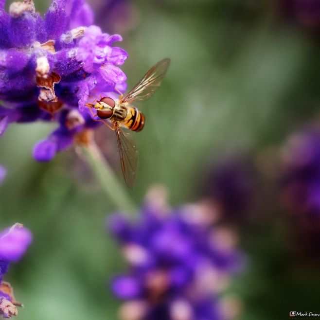 Hoverfly 2