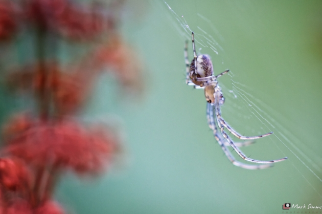 Glass Spider