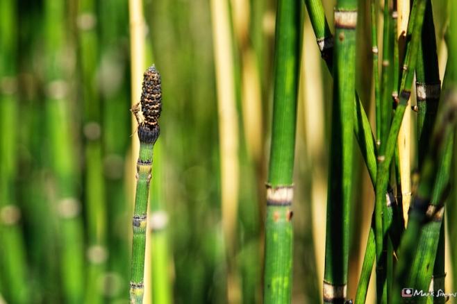 Bright Bamboo 1