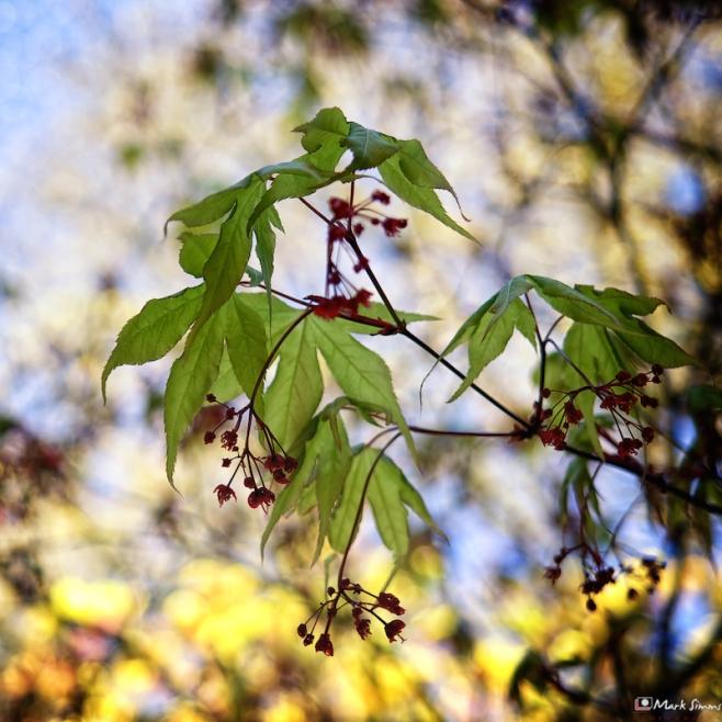 Leaf Light 1