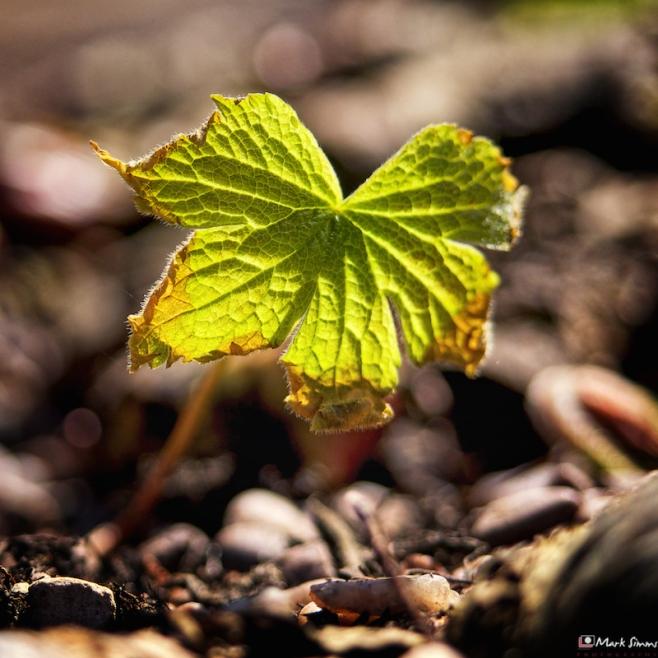 Leaf Light 3