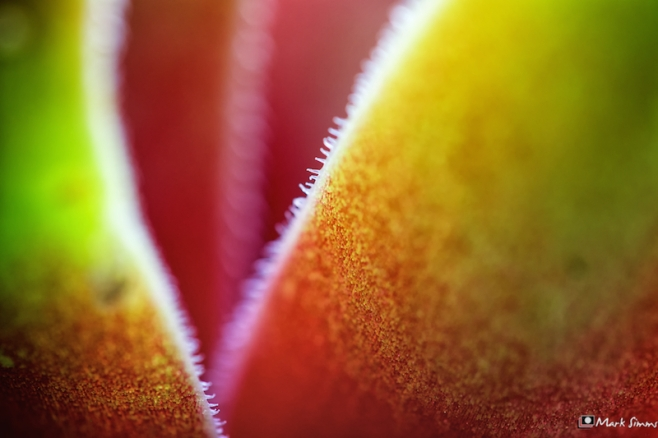 Succulent, Light, Home, Wirral, Merseyside, England