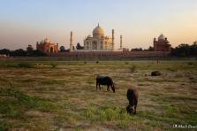Taj Mahal, Mehtab Bagh, Moon Garden, Agra, Uttar Pradesh, India