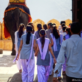 Amber Fort Elephants, Jaipur, Rajasthan, India