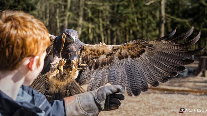 Birds of Prey, Peckforton Castle, Cheshire, England