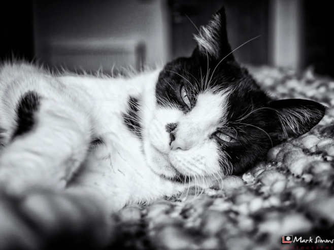 Trying to Sleep, Poppy, Home, Wirral