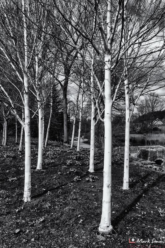 Landscapes, RHS Harlow Carr, Harrogate, Yorkshire, England