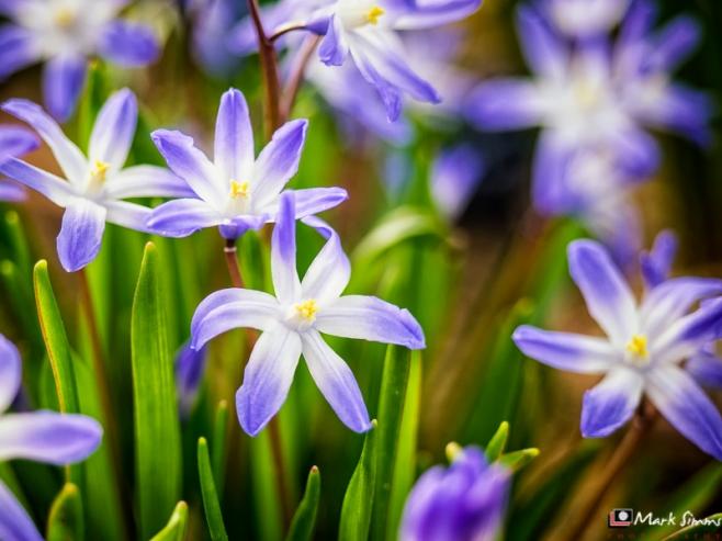 Flowers, RHS Harlow Carr, Harrogate, Yorkshire, England