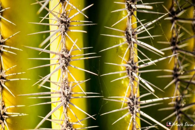 Cacti, Playa Blanca, Lanzarote, Canary Islands, Spain