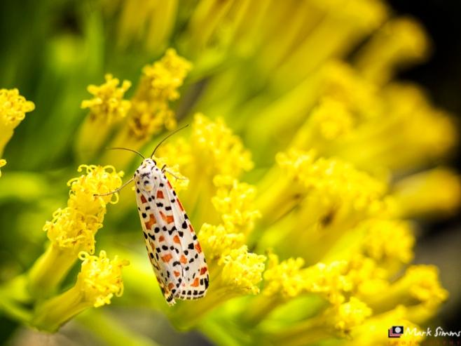 Butterfly, Playa Blanca, Lanzarote, Canary Islands, Spain