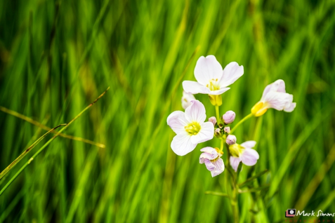Flowers and Grasses, Outer Hebrides, Scotland