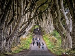 Dark Hedges, Antrim, Northern Ireland, UK