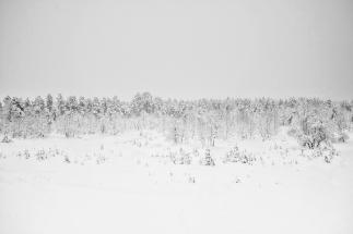 Reindeer Farm, Inari, Finland