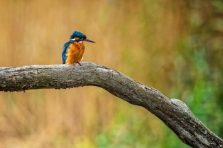 Welsh Wildlife Centre, Cardigan, Wales